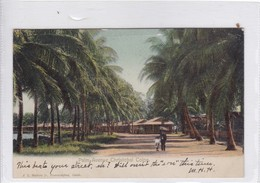 PANAMA. PALM AVENUE CHRISTOBAL COLON. J L MADURO. CIRCULEE.-TBE-BLEUP - Panama