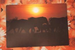South West Africa - SWA (Namibia) - Walvis Bay - Elephant - Namibia