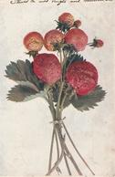 18 / 3  / 559  -  Bouquet  De  Fraises - Plantes Médicinales