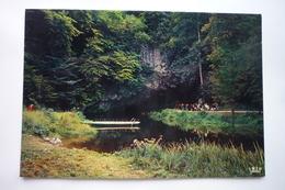 Belgique - Namur - Han Sur Lesse ( Sotie De La Grotte ) - Bélgica