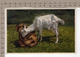 Gitzi Auf Besuch (1933) Chèvre / Ziege / Goat / Capra - Animaux & Faune