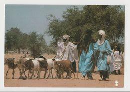 CPM Markoye, Province D'Oudalan - Arrivée De Touareg Sur L'aire Du Marché Au Bétail - Photo Bwaso - Burkina Faso