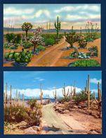 Cactus. Différentes Espèces. Lot De 10 Cartes. Voir Descriptions - Cactus