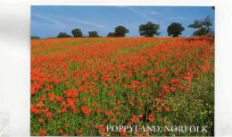 Postcard - Poppyland, Norfolk - Card No.2290018 - Unused Very Good - Postcards