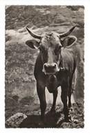 """SUISSE . """" BELLE DES MONTAGNES """" . VACHE - Réf. N°8900 - - Switzerland"""