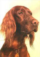DOGS / HUNDE / CHIENS /  -  IRISH SETTER   Postcard  Unused   ( P 997 ) - Perros