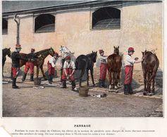 Chevaux - Pansage - Maniement Du Sabre à Pied - Vieux Papiers