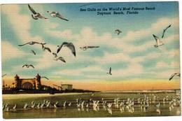 Sea Gulls On The World's Most Famous Beach, Daytona Beach Florida (pk44133) - Daytona