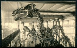 "CPSM  S/w AK Belgien Brüssel Royal Musee"" Musee-Naturelle-Dinosaurisch,Dino-groote Grasetende Dinosau....""1 AK Blanco - Museen"