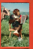 GBP-23 Singe Jouant De L'accordéon Et Chèvre, Ziege. Circulé - Scimmie