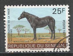 Senegal 1971. Scott #338 (U) Mare ''Mbayang'', Horse * - Sénégal (1960-...)