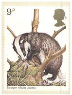 (239) UK Maxicard Postcard - Badger / Blaireau - Animali