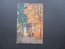 AK Österreich 1912 Herbstlandschaft. Lumiere. Aufnahme Von Hans Hildenbrand, Stuttgart. Stempel: Prag - Bäume