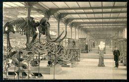 """CPSM  S/w AK Belgien Brüssel Royal Musee"""" Musee-Naturelle-Dinosaurisch,Dino-Zaal Der Fossiele En Hedenda....""""1 AK Blanco - Museen"""