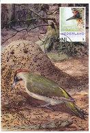 D33193 CARTE MAXIMUM CARD 2017 NETHERLANDS - GREEN WOODPECKER CP ORIGINAL - Climbing Birds