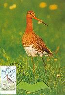 D33195 CARTE MAXIMUM CARD FD 1984 NETHERLANDS - GRUTTO GODWIT CP ORIGINAL - Birds