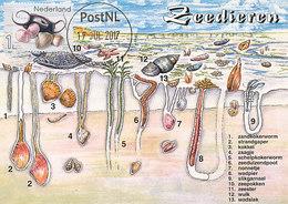 D33198 CARTE MAXIMUM CARD RR FD 2017 NETHERLANDS - LIMECOLA BALTHICA SEA SHELL NONNETJE CP ORIGINAL - Coneshells