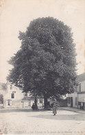 Andilly Le Tilleul De La Place De La Mairie - France