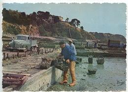 Cancale : Centre Ostréicole -, Les Parcs à Huitres (n°351/324) - Fishing