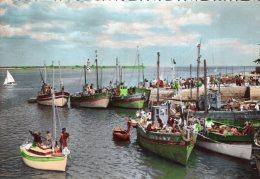 B50345 Loctudy - Sardiniers Au Port - France