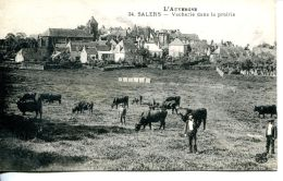 N°308 A -cpa Sales -vacherie Dans La Prairie- - Elevage