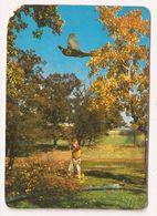 Calendario De Bolsillo, 1986, CAZA - Calendarios