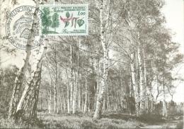 "CM-Carte Maximum Card #1983-Andorre-French-Andorra # Nature # Plants #Arbre,tree,Baum ""bouleau,birch,Birke (Liquidation) - Maximumkarten (MC)"