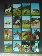 Lot De 21 Cartes Postales CHEVAUX - PAARDEN - HORSES - Pferde