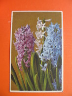Hyacinthus Orientalis-Hyacinthe..BAHNPOST-ZUG 819(...-STEIN).Feldpost - Slovenia