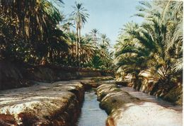 Tunez. Tozeour. Oasis. - Túnez