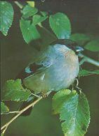 Flora Y Fauna. - Pájaros