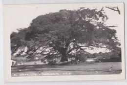 TEGUCIGALPA (Honduras) - El Güanacaste - Tree - Arbre Nommé - Real Photo Postcard - Honduras