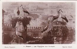 RABAT - LES CIGOGNESAUX OUDAYAS - Rabat