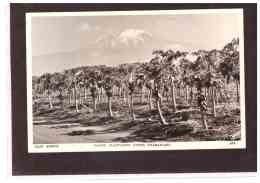 13775   -    PAPAW PLANTATION UNDER KILIMANJARO     /     NUOVA - Tanzania