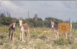ANTILLES BONAIR - Donkeys (Black Chip) , 20 U, 1999, Used - Antilles (Netherlands)