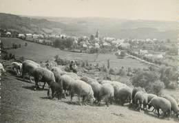 """/ CPSM FRANCE 15 """"Oradour, Vue Générale"""" / MOUTONS - Autres Communes"""