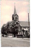 MOLENBEERSEL : Kerk - Kinrooi