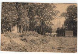 Zout-Leeuw  Léau  Landschap Paysage - Zoutleeuw