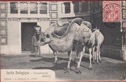 Antwerpen Dierentuin Jardin Zoologique Zoological Garden Helvetia 10 Francq Stamp Timbre 1907 Obliteration - Suisse
