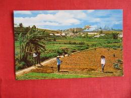 Garden Scene At Da Lat In The High Country Vietnam>  Ref 2908 - Vietnam