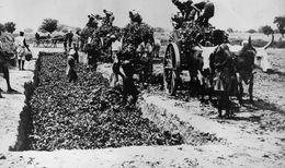 (93) Photo Originale Labourage Ensilage Du Fourrage A Baroueli Soudan Francais  Photo De Presse18X24cm - Soudan