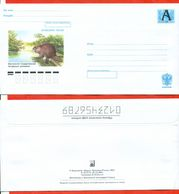 Russia 2002.Beaver. Envelope With A Printed Stamp.New. - 1992-.... Federation