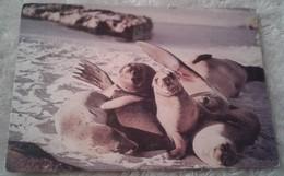 America - Ecuador - Galapagos - Lobos Marinos Amiglables Se Encuentra En La Mayoría De Las Islas Galápagos 1987 - Ecuador