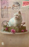 V12681  Cpa Illustrée Chat - Chats - Katten