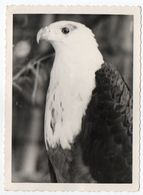 CONGO - BIRDS / EAGLE /REAL PHOTO / ELISABETHVILLE CANCEL 1964 / OVERPRINT STAMPS-THEMATIC OLYMPIC GAMES - Lubumbashi