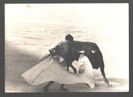 Tarjeta De Foto Original - Torero - White Back - Corrida