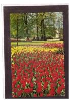 13809   -    HOLLAND IN BLOEMENTOOI    /    VIAGGIATA - Bloemen