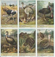 CHROMOS Liebig Série Complète N°: 1580 Oiseaux Coureurs - Liebig