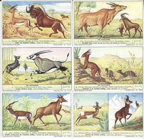 CHROMOS Liebig Série Complète N°: 1559 Les Antilopes - Liebig