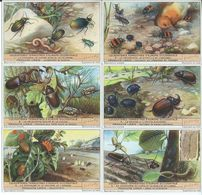 CHROMOS Liebig Série Complète N°: 1476 Les Coléoptères - Liebig